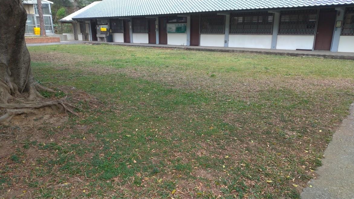 音樂教室前草皮補植