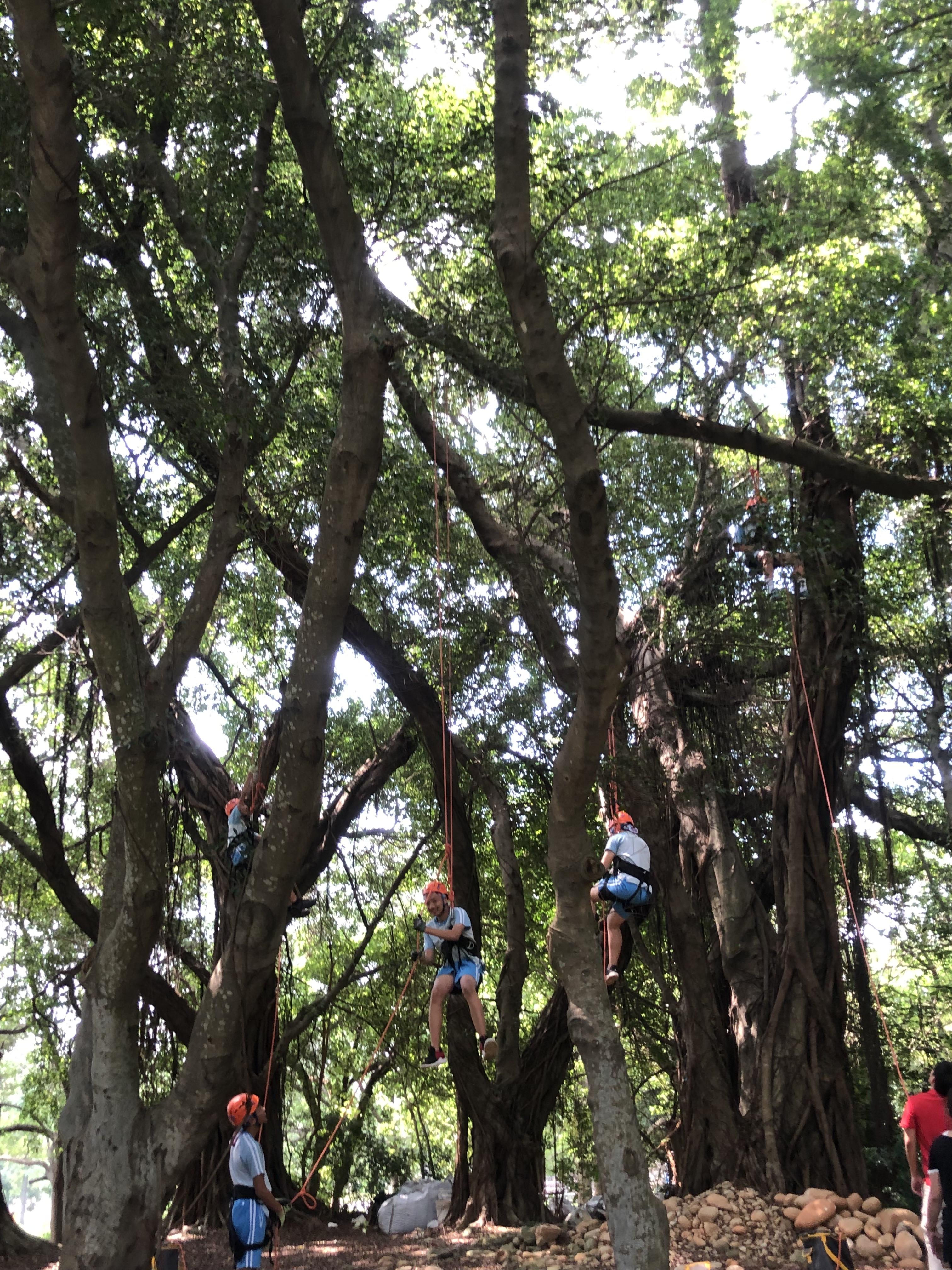 國三生涯攀樹體驗
